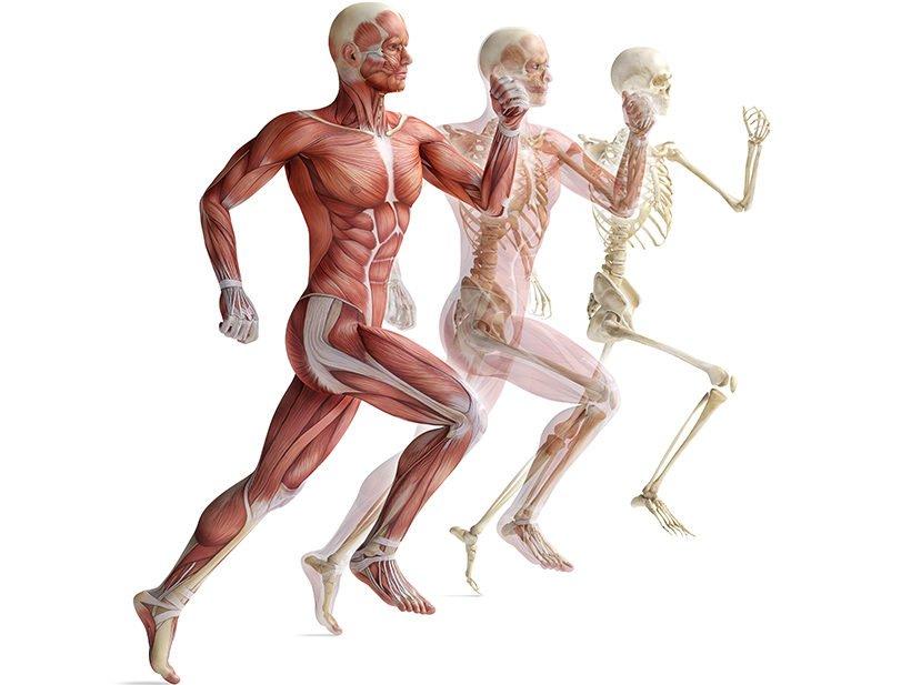 Lo sapevate che è nei muscoli il segreto dell'invecchiamento?