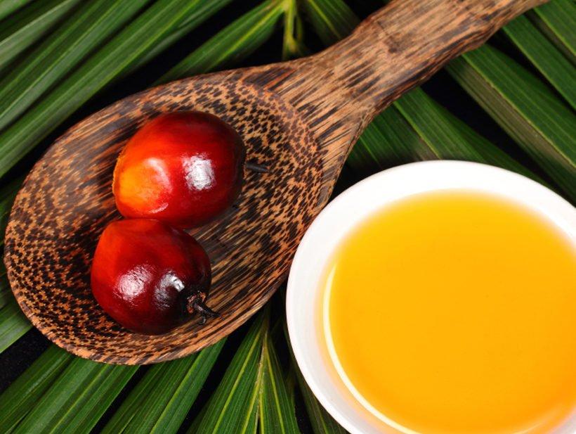 Olio di palma, fa bene o fa male?